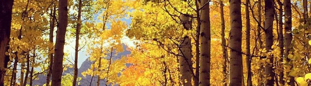 sevail__0003_Trees1