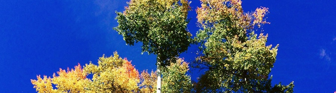 sevail__0004_Trees